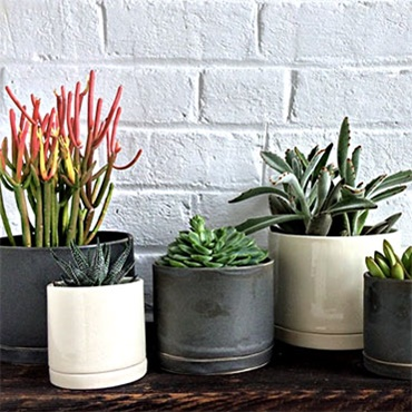 Learn How to Keep Indoor Plants Alive