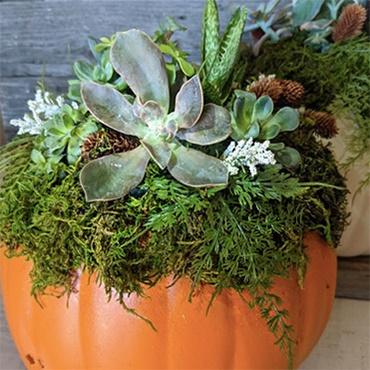 Succulents in a Pumpkin